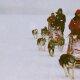 Carnet de voyage : La Laponie en chiens de traineaux
