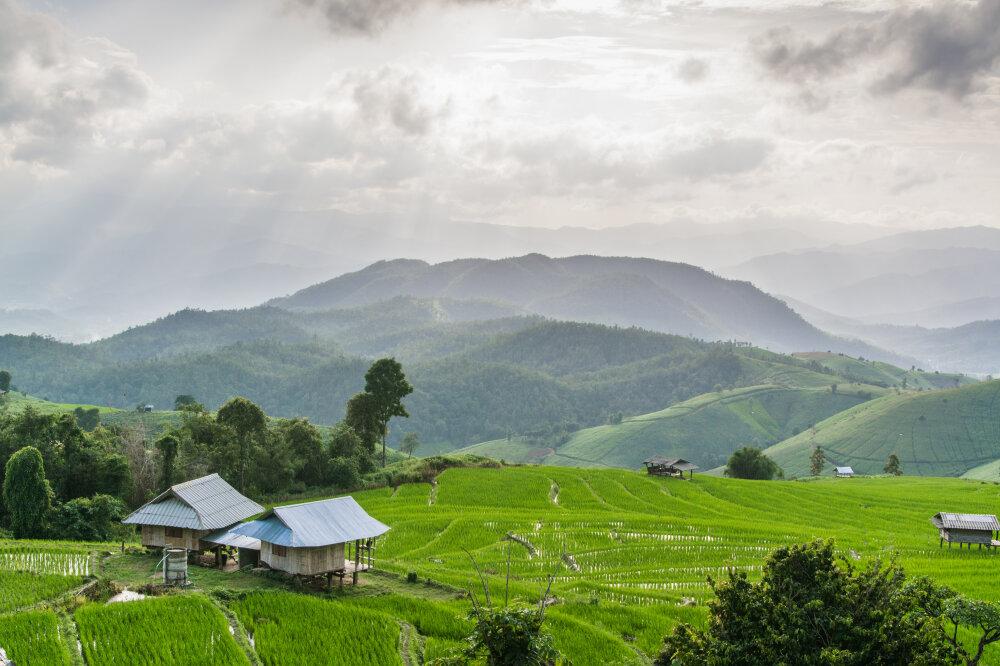 Les belles rizières de Ban Pa Pong Pieng.