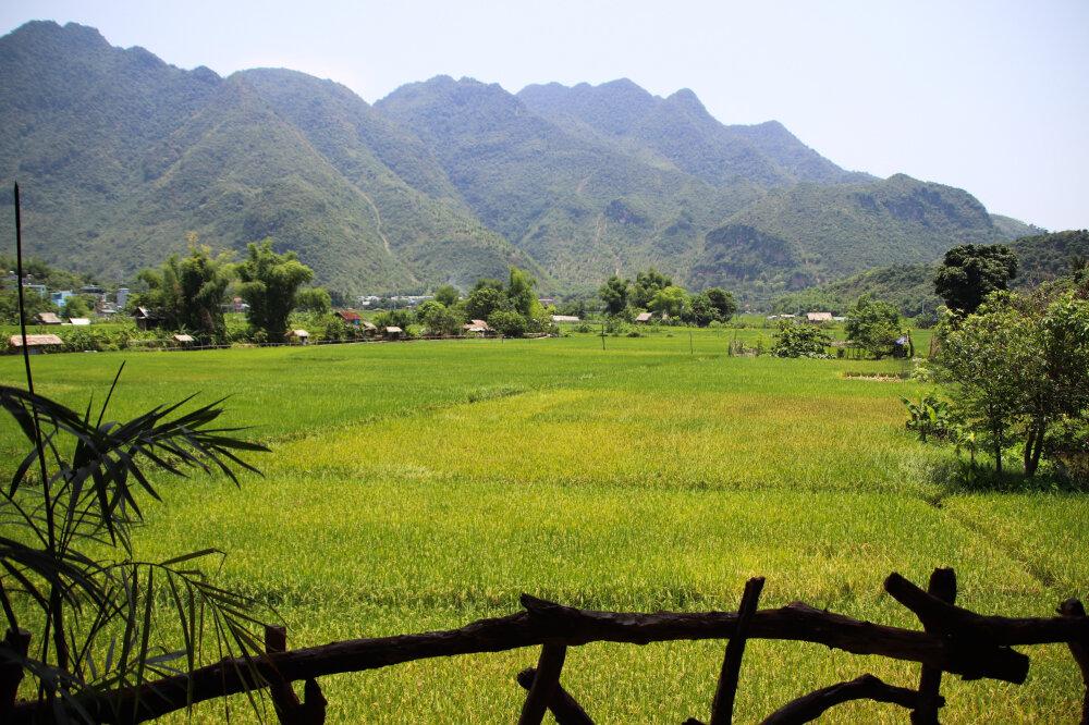 Magnifique vue sur les rizières