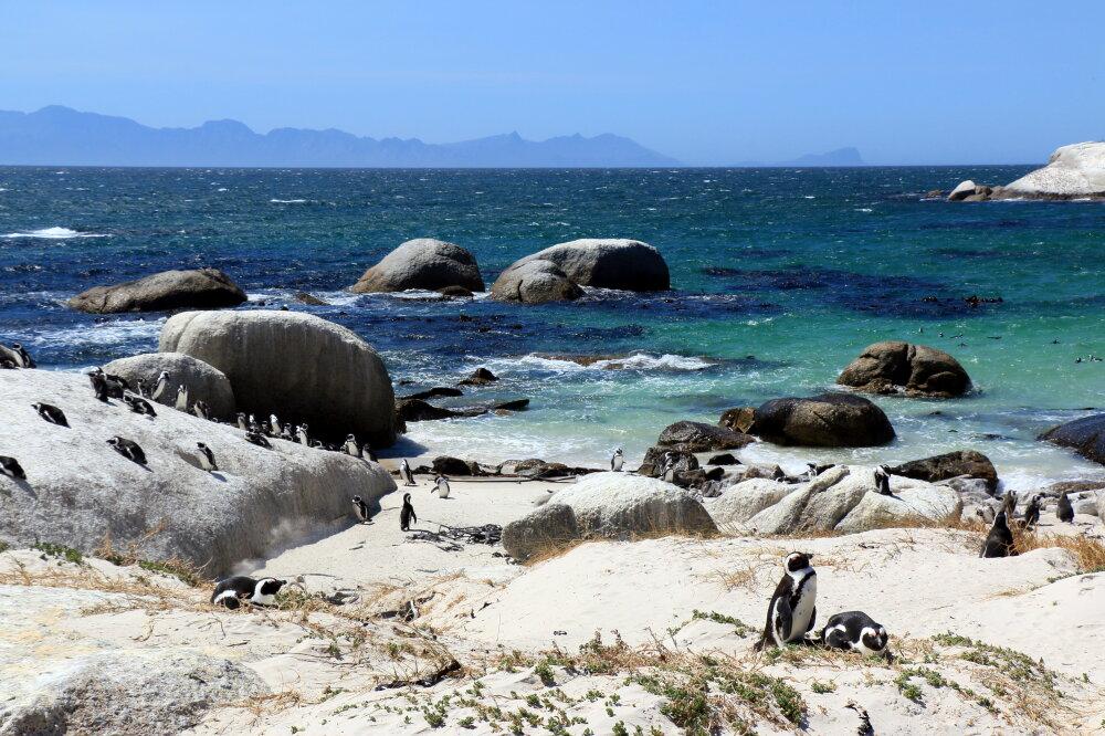 Boulders Beach, plage de Simon's Town, et manchots du Cap - Afrique du Sud