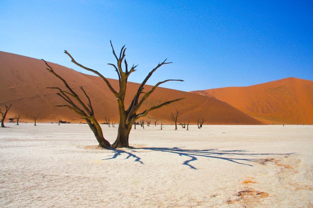 Deadvlei - Namibie