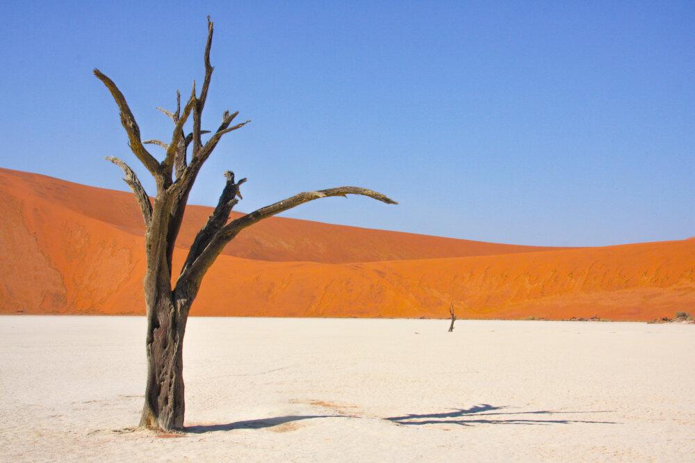Sur le splendide Deadvlei en Namibie