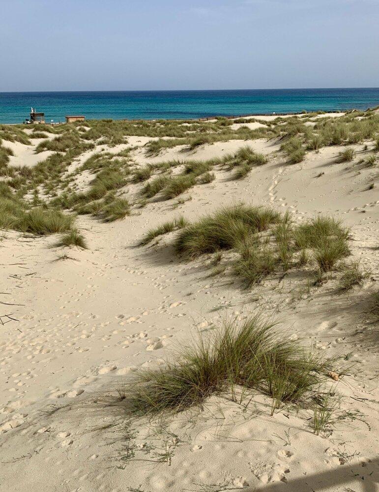 Les Dunes de la Cala Mesquida