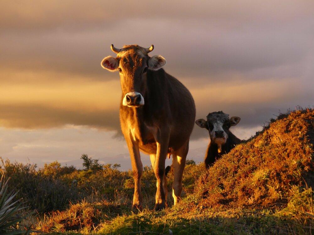 Coucher de soleil rural