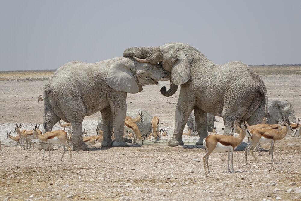 GHOST ELEPHANTS