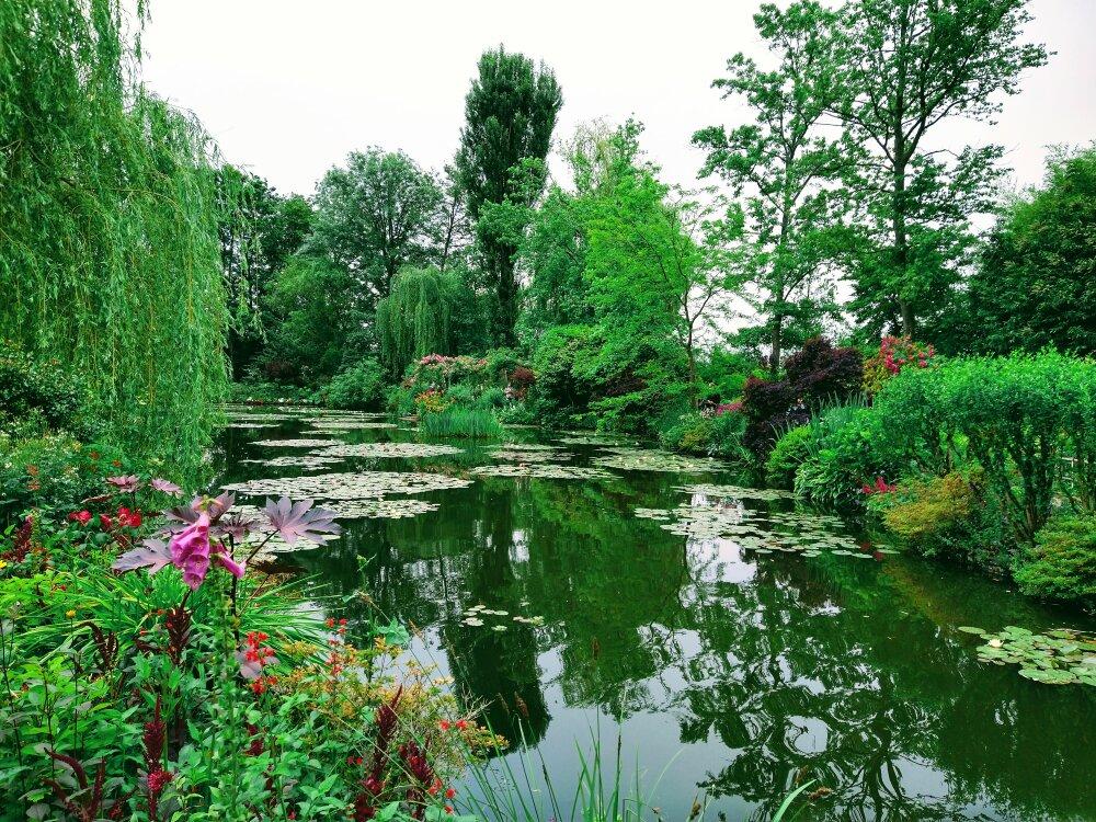 Les Nymphéas - Fondation Claude Monet