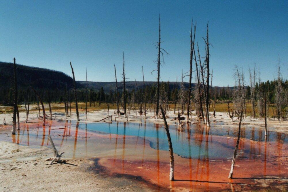 Yellowstone argentique