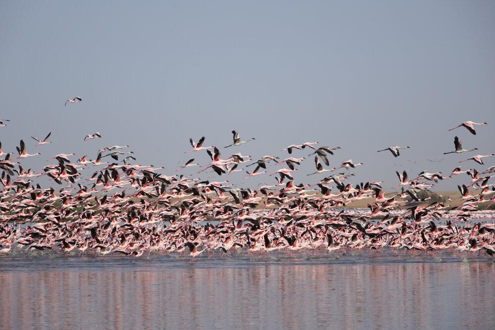 flight of flamingos