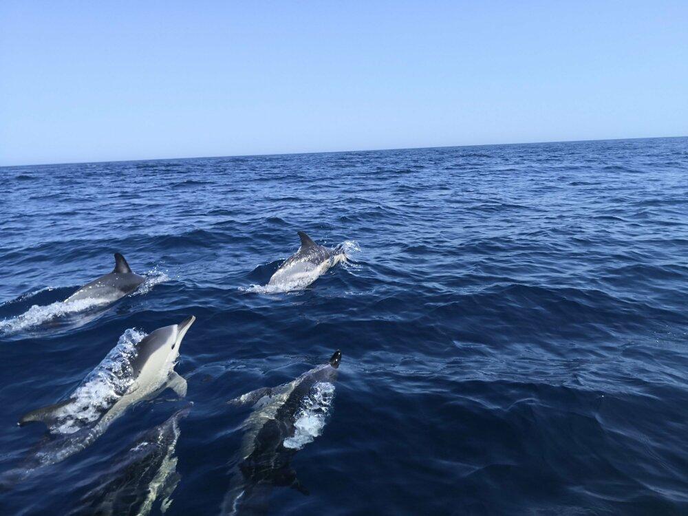 Dauphins blancs à Lagos