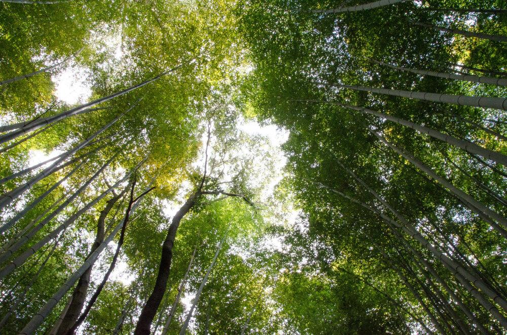 Ciel de bambous