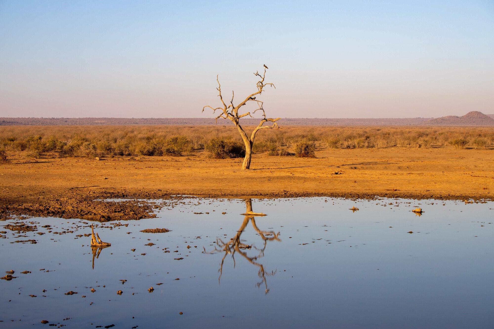 Calme plat dans la réserve de Madikwe
