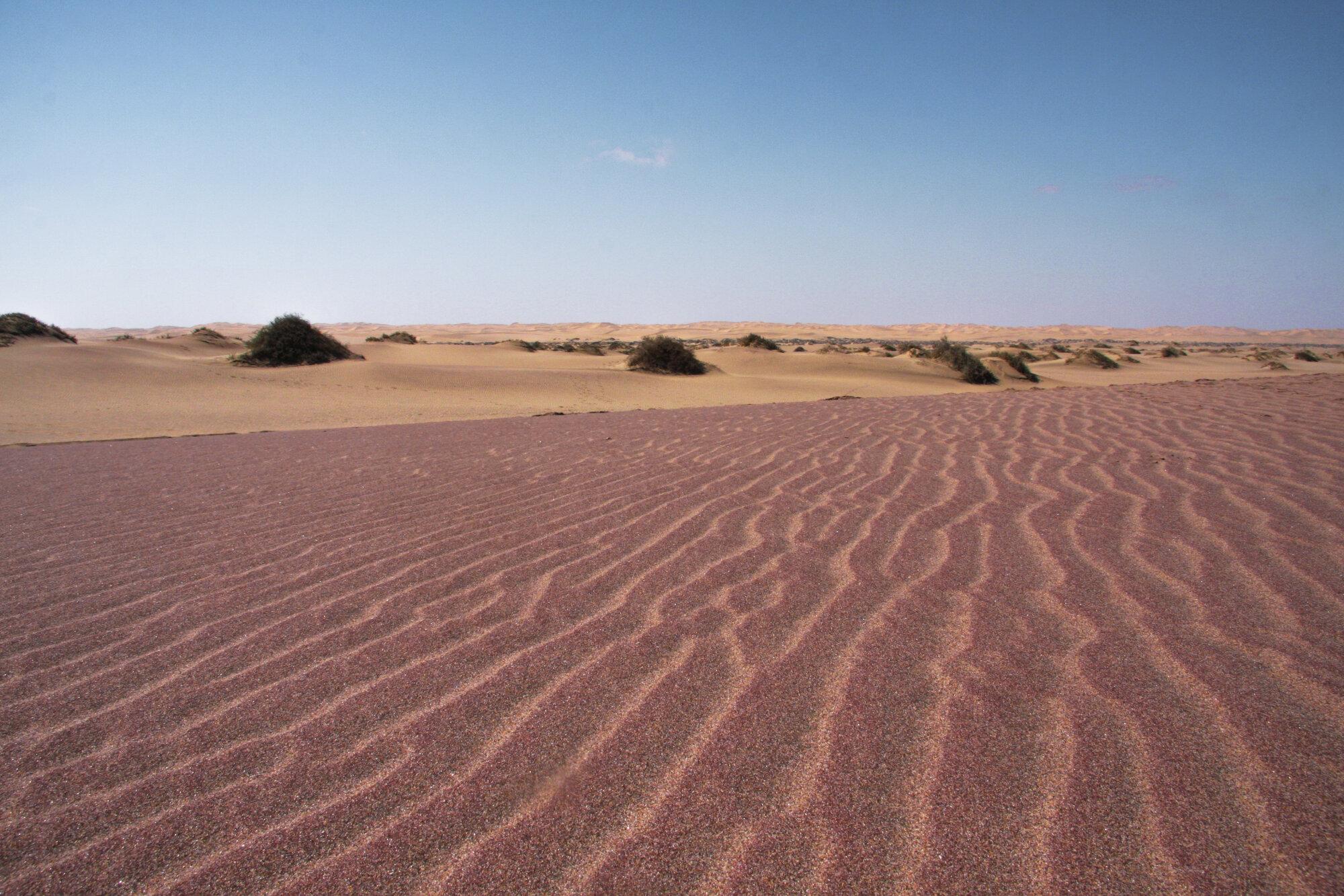 Dans le désert du Namib