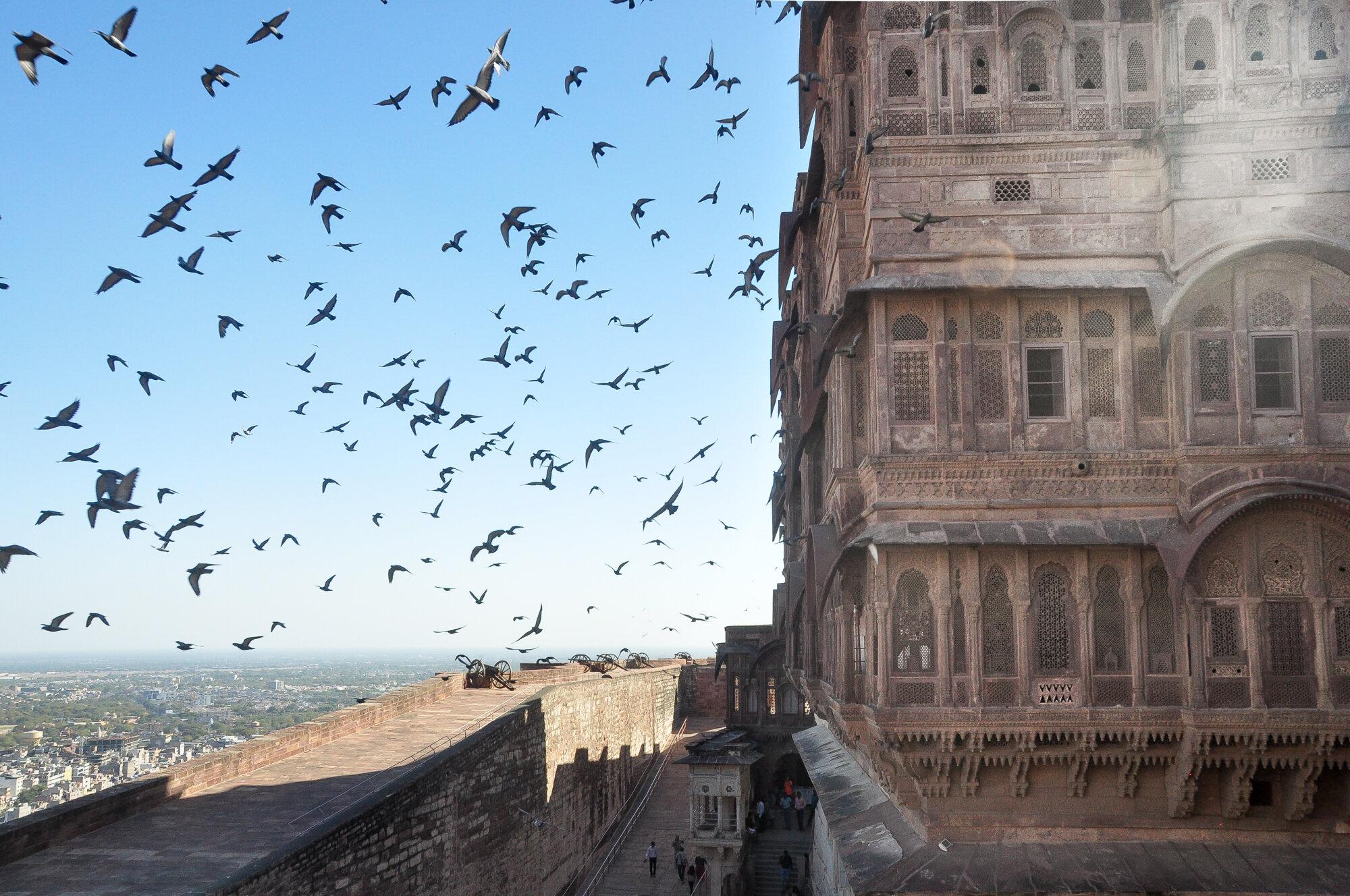 Envolée depuis le fort de Meranghar