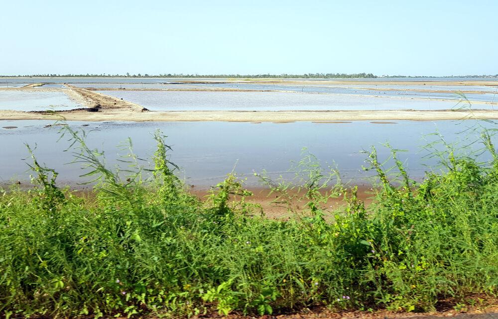 Entre Fatick et Kaolack, grandes zones de production de sel