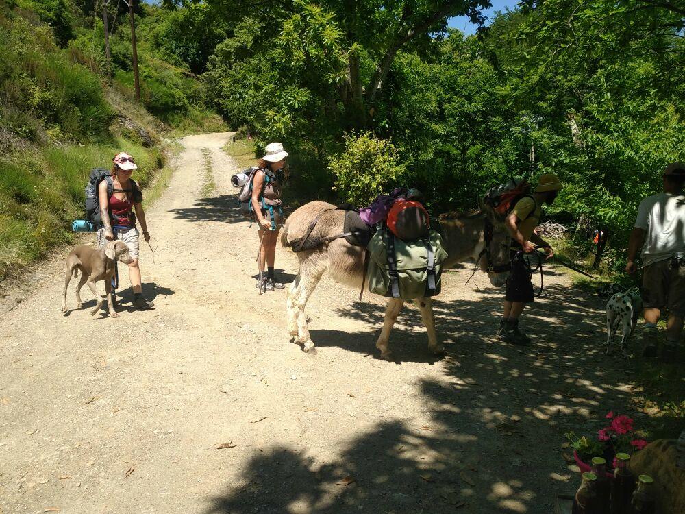 Les ânes du Chemin