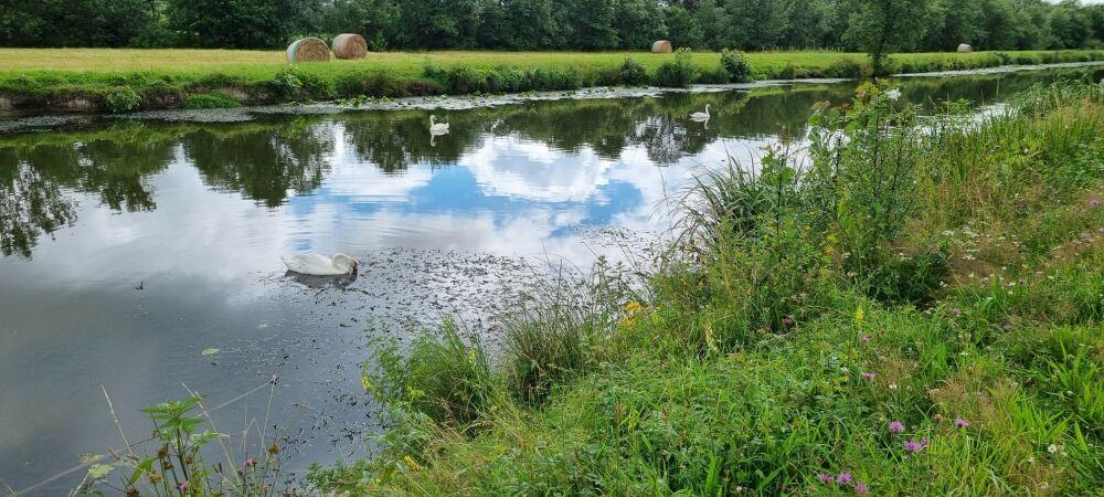 Le canal et sa faune