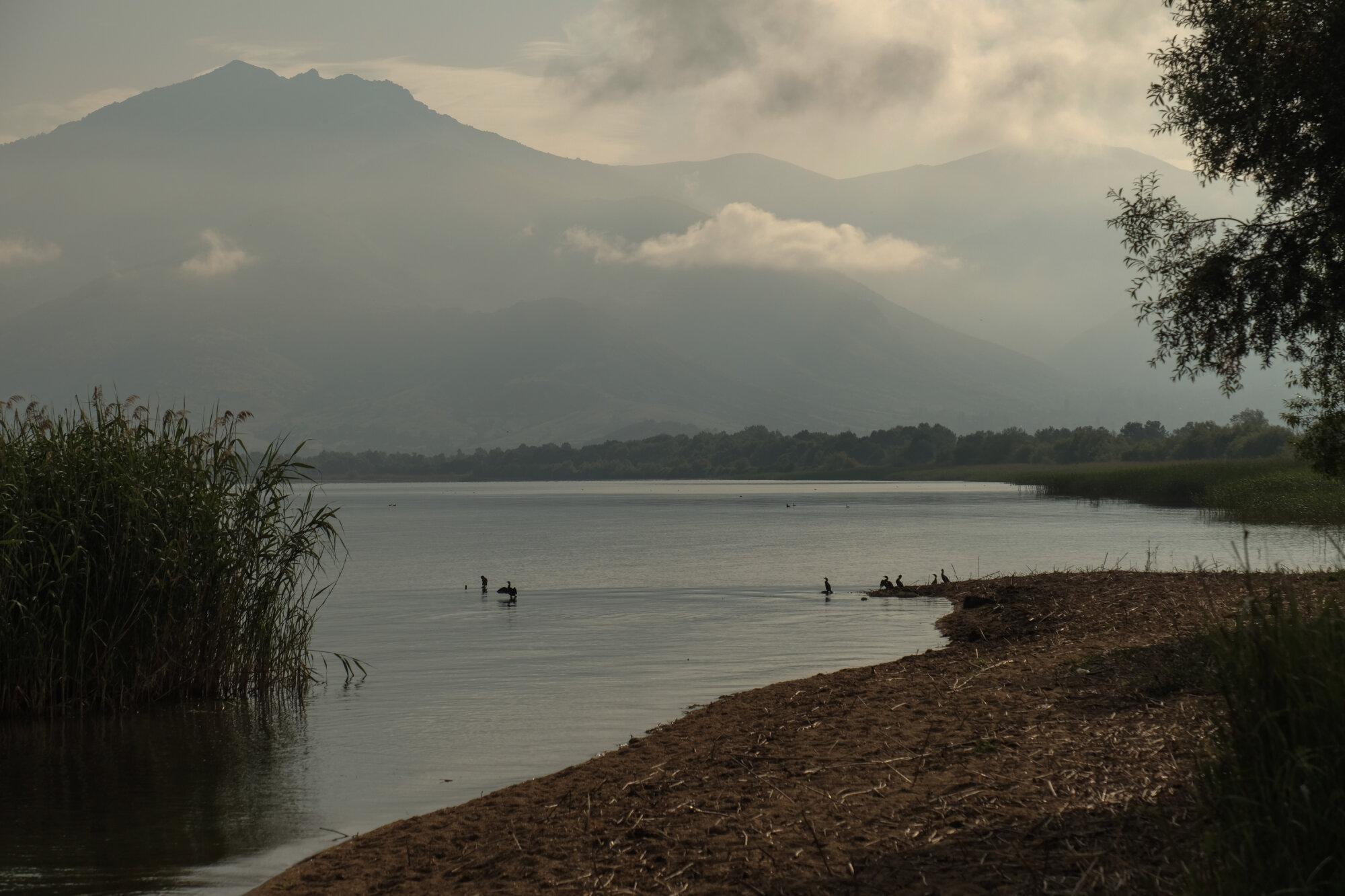 Cormorans sur le grand lac Prespa
