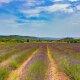 Carnet de voyage : [France] Provence, mon amour