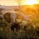 Carnet de voyage : Patchwork sud africain