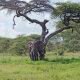 Carnet de voyage : Tanzanie en famille